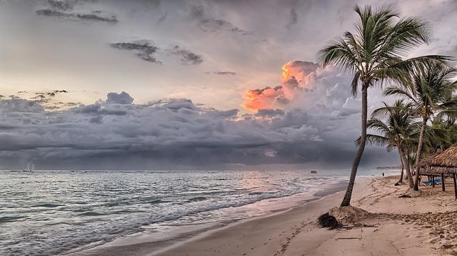 palmy na pláži.jpg