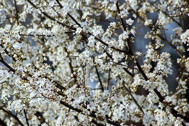 kvetoucí strom.jpg
